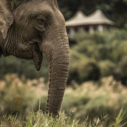 Animal Lovers: Four Seasons Tented Camp Golden Triangle All Inclusive