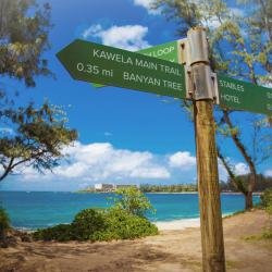Authentic Properties : Turtle Bay