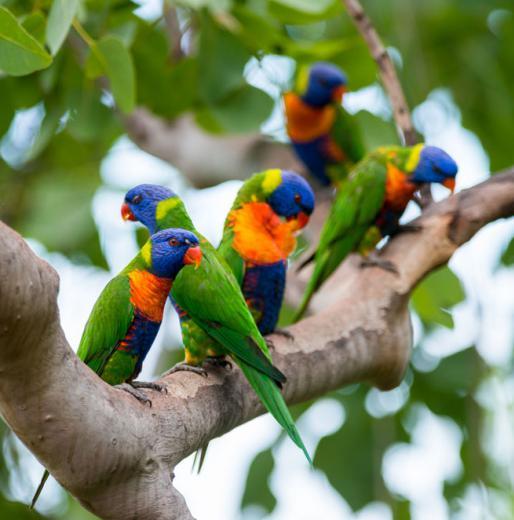 Animal Lovers: Thala Beach Nature Reserve